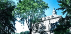 'Tree-of-Heaven' Is an Invasive Triple Threat