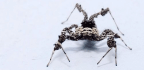 Personality Affects How These Smart Spiders Hunt