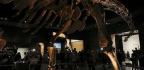Meet Patagotitan, the Biggest Dinosaur Ever Found