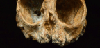 A 13 Million Year Old Skull Could Show Us What Our Ancestors Looked Like