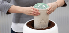 Ashes to Ashes, Dust to ... Interactive Biodegradable Funerary Urns?