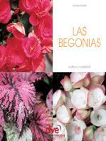 LAS BEGONIAS