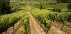 What You Need to Know About Chilean Wine