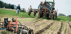 Injecting Manure Into Soil Cuts Estrogen in Farm Runoff