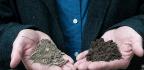 The Soil Solution