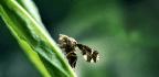 Goldenrod Activates Defenses When It 'Smells' Flies