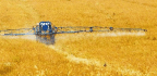 Does Glyphosate Cause Cancer?