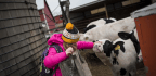 For 4-H Kids, Saying Goodbye To An Animal Can Be The Hardest Lesson