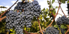 What You Need to Know About Sangiovese, Italy's Biggest-Selling Grape
