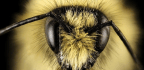 Want to Save The Bees? Here's What You Should Know.