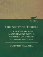 The Scottish Terrier - It's Breeding and Management With a Chapter on Cairns - Illustrated with plates