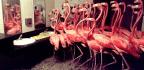 Flamingos In The Men's Room
