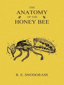 The Anatomy of the Honey Bee