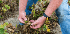 A Wayward Weed Killer Divides Farm Communities, Harms Wildlife