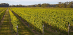 Explore the Diverse Styles O=of Long Island Wine
