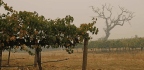 How the Wildfires Are Hurting California's Wine Industry