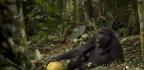 The Year's Most Awe-Inspiring—and Devastating—Wildlife Photos
