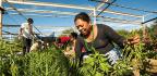 'Healing Through Harvesting'