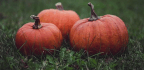 Pumpkins Evolved From a Literal Genetic (Monster) Mash-Up