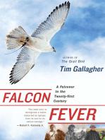 Falcon Fever