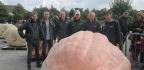 How Do You Breed a 2,624-Pound Pumpkin?