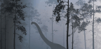 If You Enjoy Sleeping at Night Instead of the Day, Thank the Dinosaurs for Going Extinct