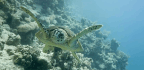 Eleanor the Sea Turtle Swam Through a Tropical Storm and Survived