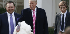 Trump Extends a Presidential Pardon for Fowl Behavior