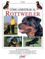 Cómo adiestrar al Rottweiler