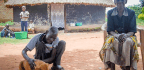 How Dogs Are Lending A Paw To Uganda's Traumatized War Veterans