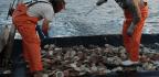 Fishermen Fear Damage From Wind Farms Along The Eastern Seaboard