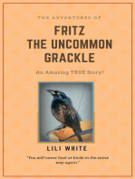 Fritz the Uncommon Grackle