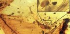 Amber-Trapped Tick Suggests Ancient Bloodsuckers Feasted On Feathered Dinosaurs
