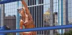 Amazon Will Stream AVP Beach Volleyball Tour