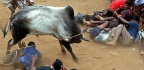 Jallikattu Movement for Tamil Youth Is Both Protest and Celebration of Their Power
