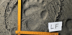 Phone, Ruler, And Footprints Identify Pandas On The Move