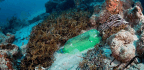 Plastic Pollution Is Killing Coral Reefs, 4-Year Study Finds
