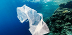 11 Billion Pieces of Plastic Are Riddling Corals With Disease