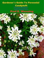 Gardener's Guide To Perennial Candytuft