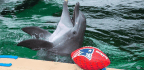 Elephants For Eagles, Puppies For Patriots
