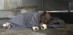 Tilapia-Skin Bandages Heal Burns On Black Bears Caught In California's Thomas Fire