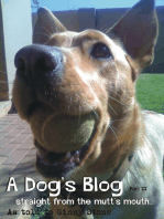 A Dog's Blog II