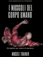 I Muscoli del Corpo Umano