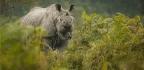 Remembering Rhinos