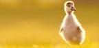 Spring Into Life Baby Birds