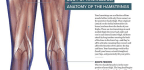 Get to Know … Your Hamstrings