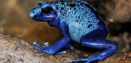 A Poisonous Frog in the Barrow