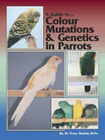 A Guide to Colour Mutations and Genetics in Parrots