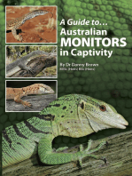 A Guide to Australian Monitors in Captivity