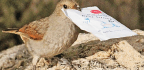 Birds That Can Open Sugar Packets Hint At Evolution Of Intelligence